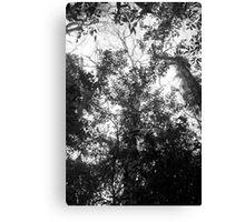 Vietnam Jungle Canvas Print
