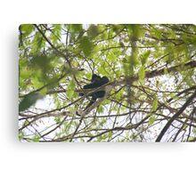 Oranged Cheeked Gibbon Canvas Print