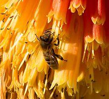 Bee at Work by Chris Kean