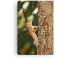 Vietnam lizard Canvas Print