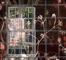 window within a window by dnilasor