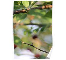 Cherry Tree Magic Poster