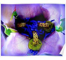 Passiflora detail Poster