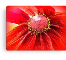 Red Hot Canvas Print