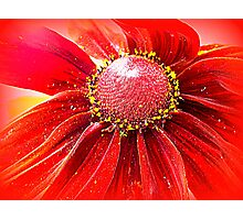 Red Hot Photographic Print