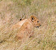 Lion cub by Valerija S.  Vlasov