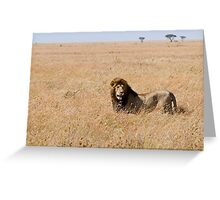 Lion in the grass lands Greeting Card