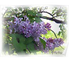 Purple Royalty Poster