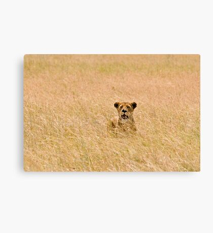 Tough lioness Canvas Print