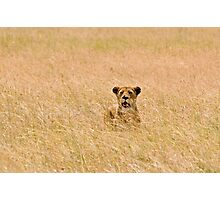 Tough lioness Photographic Print