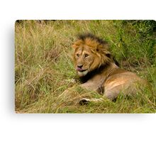 Pittoresque Male Lion  Canvas Print