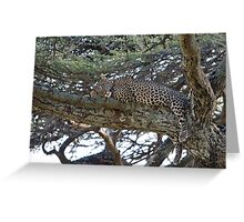 Leopard dreaming of ... Greeting Card