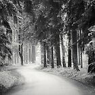 road through the forest by Dorit