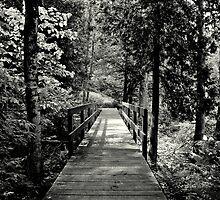 The Path ! by Elfriede Fulda