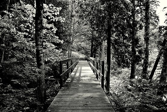 The Path ! by Elfriede Fulda