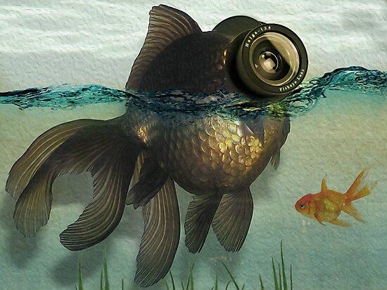 Fish eye lens by Vin  Zzep