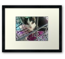 Rescued Kitten Twinkie Framed Print