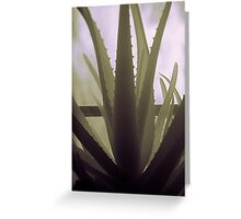 Infra red aloe Vera  Greeting Card