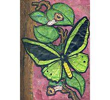 Richmond Birdwing Butterfly Photographic Print