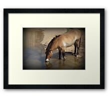 Przewalski's Wild Horse (Critically Endangered) Framed Print