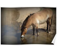 Przewalski's Wild Horse (Critically Endangered) Poster