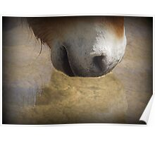 Przewalski's Wild Horse ~ Wishing Well Poster
