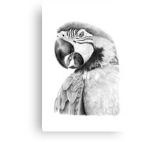 Parrot in Pencil Canvas Print