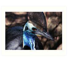 Cassowary Blue Art Print