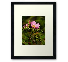The Whole of Nature Framed Print