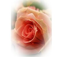 Ode to the Rose Photographic Print
