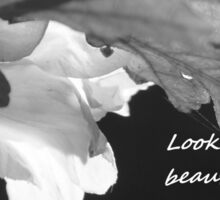 Look for the Beauty in All Things Sticker