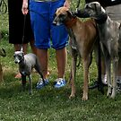 Kartano Weekend Sighthound Specialty 2013 by homesick