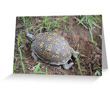 Nesting Box Turtle Greeting Card