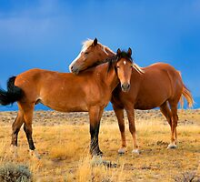 Lean on Me, Wild Mustangs by BigRichPho