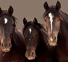 The Three Amigos, Wild Mustangs by BigRichPho
