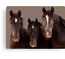 The Three Amigos, Wild Mustangs Canvas Print