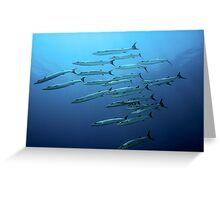 Barracudas Greeting Card