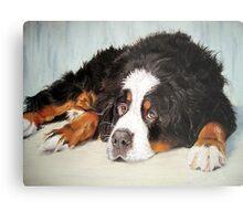 Bernese Mountain Dog Portrait Metal Print