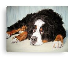 Bernese Mountain Dog Portrait Canvas Print