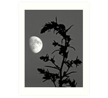 Country Moon Art Print
