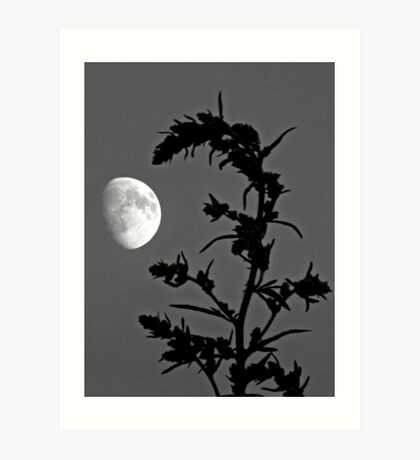 Country Moon Art Print