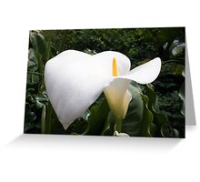 Single Lily Greeting Card