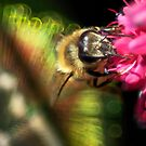 Feather Your Bee by Kenneth Haley