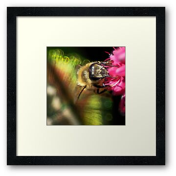 Feather Your Bee by Ken Haley