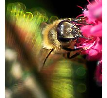 Feather Your Bee Photographic Print