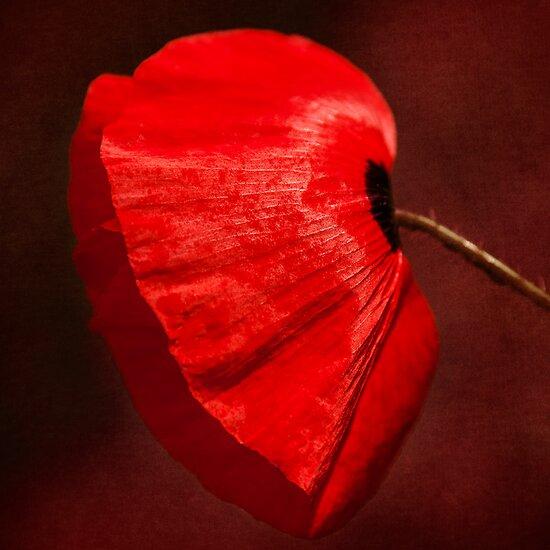 Poppy by Svetlana Sewell