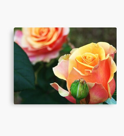 Peace and Beauty Canvas Print