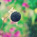 Seed by Emma Deer Photography