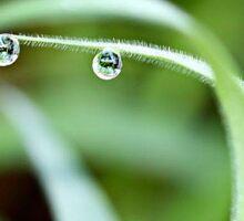 Two Dew Drops Sticker