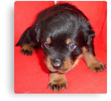Young Rottweiler Puppy On A Red Background Canvas Print